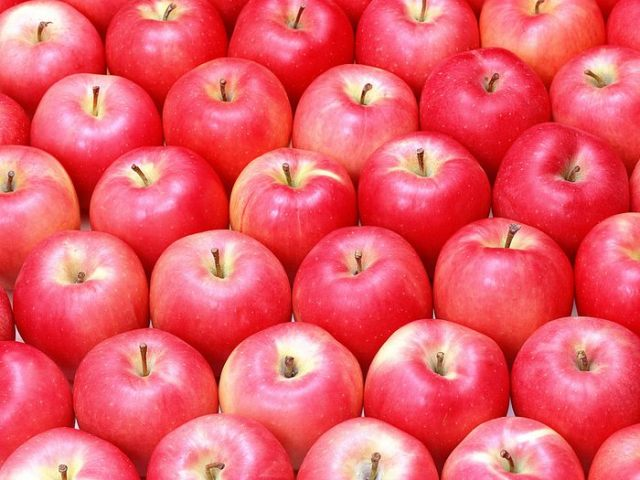 fruit_apple_apple-tree_wallpaper_Vol_014_SN158