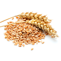 whole-grain-wheat
