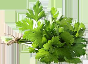parsley-leaves-1